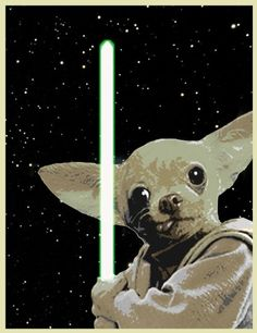 Chihuahua Yoda