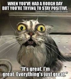 Image result for funny stay positive christmas picture