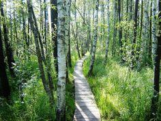 Poleski Park Narodowy – park narodowy położony w województwie lubelskim, w polskiej części Polesia, utworzony 1 maja 1990 r. Obejmuje liczne bagna, torfowiska i jeziora krasowe oraz naturalne kompleksy leśne z bogactwem flory i fauny, znajdujące się na Równinie Łęczyńsko-Włodawskiej. Powierzchnia parku wynosi 9764,3071 ha, zaś jego otuliny 13624,25 ha Source: https://www.facebook.com/miejscawpolscektore?fref=photo