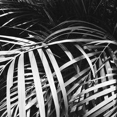 never enough 🌴🌴🌴 #hongkong /// #palmtrees