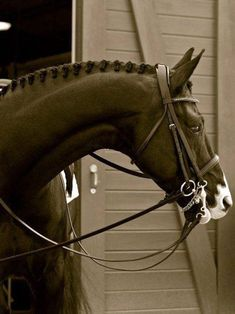 Love the white muzzle on this warmblood