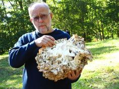 A rundown of mushroom species you can grow, and a bit about each of them: