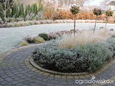 Zielonej ogrodniczki marzenie o zielonym ogrodzie - strona 886 - Forum ogrodnicze - Ogrodowisko