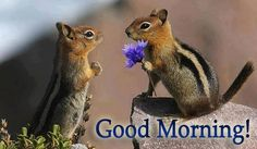 Good Morning image #5366 - Good Morning! - Cute, Flower. View popular Good Morning images and share on Facebook, WhatsApp and Twitter.