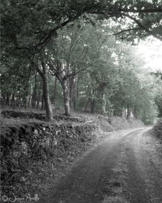 Spain Photography - Quiet Country Road in Galicia - Wall Art / / Home Decor - Nature Print// Landscape