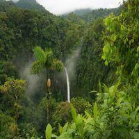 Rainforest High Quality Wallpaper
