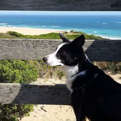 The journey is the destination.  #return #warrnambool #explore #nofilter #noedit #ocean #beach #puppy #dogsofinstagram #country #beautiful #blackandwhite #refresh #recharge #friend #travel #annual #notallheroeswearacape #notoftenenough #walk #sunny #summer #tradition #christmas #pulang @purplepoppy13 by shlansky