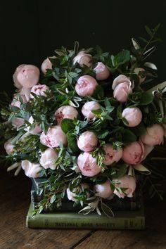 "maxitendance: "" Bouquet of Pale Pink Peonies "" Deco Floral, Arte Floral, Floral Design, My Flower, Fresh Flowers, Beautiful Flowers, Peony Flower, Peony Plant, Peony Bush"