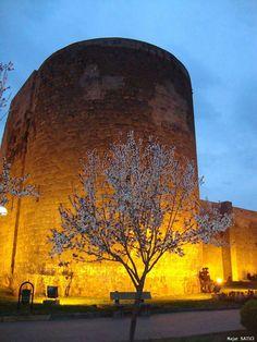 Bahar Çiçekleri Ve Surlar - Diyarbakır