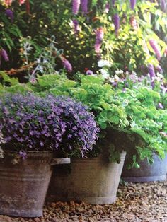 potted color .#PinMyDreamBackyard