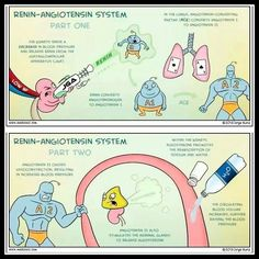 Image result for renin angiotensin aldosterone pathway comic