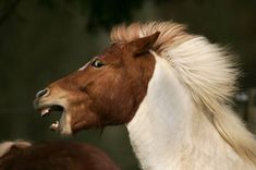 wild eyed horse - Google Search