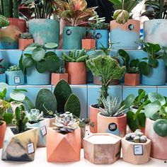 Botanical market bringing together the best independent sellers of plants, pots and everything in between for green fingers. Regular free shopping and workshop events in London and beyond. Garden Plants, House Plants, Green Rooms, Plant Decor, Planter Pots, Bloom, The Incredibles, Marketing, Collaboration