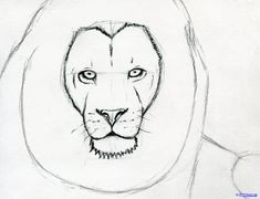 How To Sketch A Lion Step  Stepbystepfacepainting Lion Drawing Simple Drawing Techniques