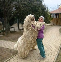 is it a real dog?