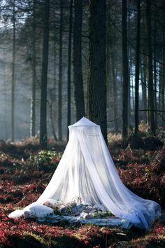 Mystiek wit in natuurlijke omgeving.
