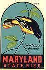Maryland State Bird: the Baltimore Oriole!