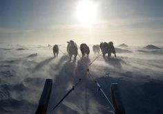 Sled dogs were a traditional mode of transportation in the Arctic before the use of and spread of snowmobiles.  This captures the barren paths in the Arctic, as well as shows that sled dogs are still used (and often preferred) in modern times.