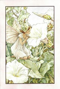 FLOWER FAIRIES/BOTANICALS: The White Bindweed Fairy; This is an original vintage Cicely Mary Barker Flower fairies colour print. It is not a modern reproduction, approximate size x x 3 inches Cicely Mary Barker, Art And Illustration, Flower Fairies, Flower Art, Fantasy Kunst, Fantasy Art, Vintage Fairies, Beautiful Fairies, Beautiful Things