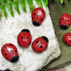 Ladybug, ladybug fly away home..........Here are lots and lots of ladybugs to add willy nilly to your fairy garden. (Gnomes like them, too) These cute bugs can also be added to your plant containers and moss garden for a touch of whimsy.  Formed of clay, fired, glazed and refired with vibrant colors and black each ladybug measures in the area of 1 long and 3/4 wide. No two are the same, however, so please expect variations.  Here are more ideas for your ladybugs:  ~~Its the perfect thin...