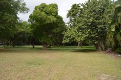 Approximately a half acre of land which for some unknown number of years has been a Mango orchard but unfortunately not cared for.