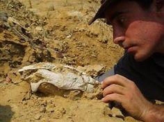 17/02/2010 - O fóssil mais antigo de uma tartaruga marinha de África é de Angola | Tartarugas Marinhas