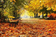 Autumn Park - Fototapeter & Tapeter - Photowall