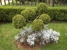 topiaria buxinho