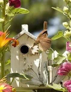 When it comes to birds, avid watchers know that you can never have too many bird houses in your yard. Birds appreciate these items during the nesting and migration seasons, which can just about cover the entire year in some areas. Dream Garden, Garden Art, Garden Birds, Beautiful Birds, Beautiful World, Simply Beautiful, Bird Cages, Bird Feathers, Bird Houses