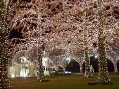 Opryland Hotel Christmas lights photo © Michelle Durham My favorite place to see Christmas lights. Christmas Light Displays, Holiday Lights, Christmas Lights, Christmas Decorations, Holiday Decor, Outdoor Decorations, Holiday Ideas, A Christmas Story, Country Christmas