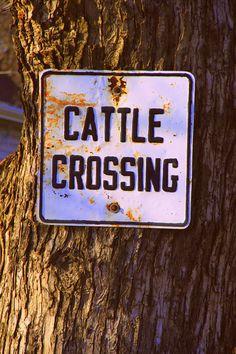 moooooove....Texas right of way!