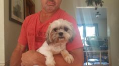 Suzy is an adoptable Shih Tzu searching for a forever family near Highland, IL. Use Petfinder to find adoptable pets in your area.