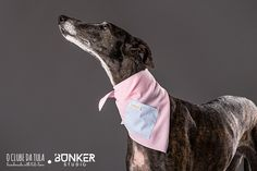 Tula and the Pink Vichy Civic Dog® scarf, square pocket. http://civicdog.com/product/tuli-pañuelo-civic-dog-vichy-rosa