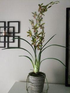 "30"" Quality Silk Green Cymbidium Orchid Arrangement"