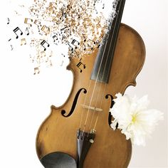 Violin Metamorphosis