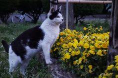 猫|ネコ|ねこの日々 | じぇいなすと、うちニャンズ+外猫いっぱい