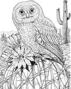 owl coloring page | Coloring pages for adults - Printables and ...