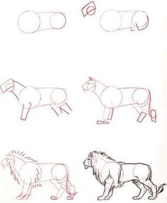 How To Draw Easy Animals Step By Step Image Guide – Animal Drawing Lion Drawing, Basic Drawing, Step By Step Drawing, Painting & Drawing, Drawing Ideas, Pencil Art Drawings, Art Drawings Sketches, Easy Drawings, Animal Sketches