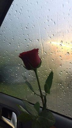 Find images and videos about red, sad and rose on we heart it - the app to get lost in what you love. Rainy Wallpaper, Rose Wallpaper, Wallpaper Backgrounds, Aesthetic Iphone Wallpaper, Aesthetic Wallpapers, Tumblr Roses, I Love Rain, Aesthetic Roses, Rain Photography