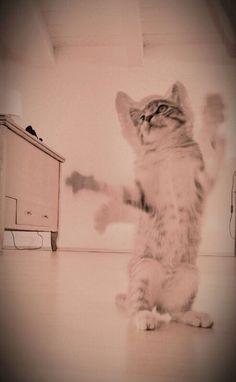 #ninotta#gatto#maoooo