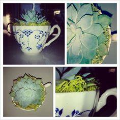 Teacup Succulent DIY