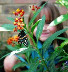 Creating a Pollinator Garden from Kids Gardening