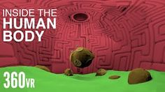 Take a journey through the human body in Virtual Reality with Life Noggin! HOW TO WATCH: Watch it with maximum quality with the updated youtube app on your mobile device or on your desktop with Chrome. Simply tilt or swipe your finer on your phone, or drag your mouse around or use the wasd...