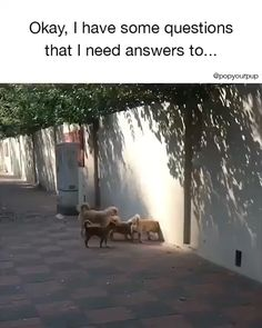 If You Like 👍 Share With Your Friends ❤ animals [Video] Funny Animal Videos, Cute Funny Animals, Cute Baby Animals, Animal Memes, Funny Dogs, Animals And Pets, Videos Funny, Cute Cats And Dogs, Dogs And Puppies