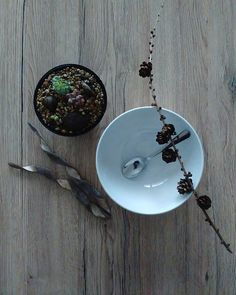 Sukulent bonsai