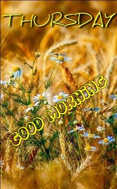 Good Morning Thursday Images, Thursday Morning, Morning Blessings, Quotes, Quotations, Quote, Shut Up Quotes