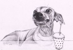 Italian greyhound art original drawing of Tess от JimGriffithsArt