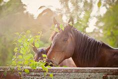 Dreamy horse.