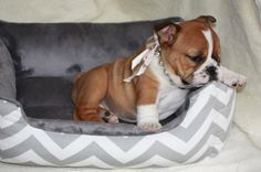 I don't want the dog bed....just the ADORABLE puppy!