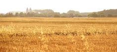 Printable, digital, photo, photography, wheatfield, nature, colors, photoshoot, photograph, photographer, digital download, print, printing by ArtofLilla on Etsy